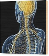 Human Nervous System, Artwork Wood Print