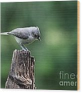 Tufted Titmouse Wood Print