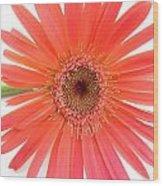 4969 Wood Print