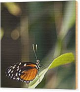 A Butterfly Rests On A Leaf Wood Print