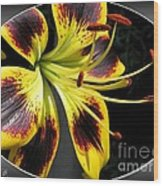 Asiatic Lily Named Black-eyed Cindy Wood Print