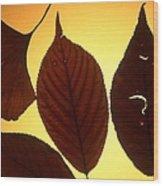 5 Autumn Leaves Wood Print