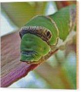 Big Green Caterpillar Wood Print