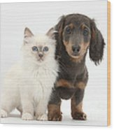 Blue-point Kitten & Dachshund Wood Print