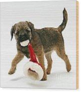 Border Terrier Puppy Wood Print