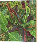 5- Croton Wood Print