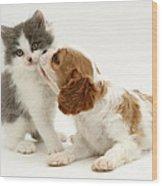 Dog And Cat Wood Print by Jane Burton