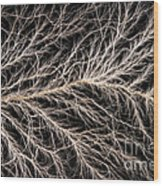 Electrical Discharge Lichtenberg Figure Wood Print by Ted Kinsman