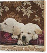 Goldidor Retriever Puppies Wood Print
