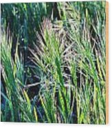 Grass In Bright Sunlight Wood Print
