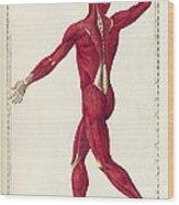 Historical Anatomical Illustration Wood Print