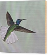 Hummingbird Wood Print by David Tipling