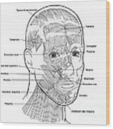 Illustration Of Facial Muscles Wood Print