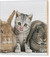Kitten And Rabbits Wood Print