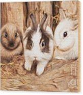 5 Little Rabbits Wood Print