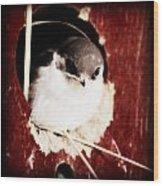 Red Barn Birdie Wood Print