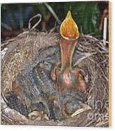 Robin Nestlings Wood Print