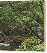 Rushing Mountain Stream Wood Print by Thomas R Fletcher