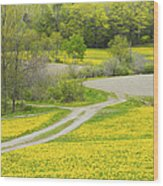 Spring Farm Landscape With Dandelion Bloom In Maine Wood Print