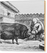 Swine, 19th Century Wood Print