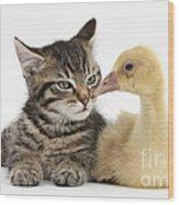 Tabby Kitten With Yellow Gosling Wood Print