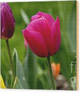 Tulip Garden University Of Pittsburgh  Wood Print