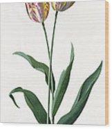 5 Tulip Tulip  Wood Print