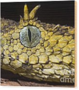 Usambara Eyelash Bush Viper Wood Print