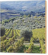 Vineyards And Olive Groves Wood Print by Jeremy Woodhouse