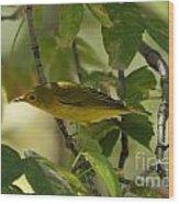 Wilson's Warbler Wood Print