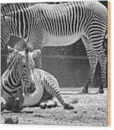Zebras In Black And White Wood Print