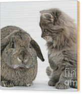 Kitten And Rabbit Wood Print