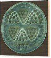Diatom, Sem Wood Print