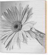 5495c3 Wood Print