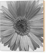 5557c4 Wood Print