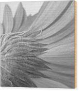 5572-2-002 Wood Print