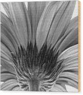 5574-31c Wood Print