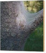 Bird-cherry Ermine Caterpillars Wood Print