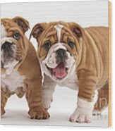 Bulldog Puppies Wood Print