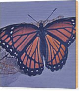 Butterfly Design Collection Wood Print
