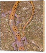 Cave Salamander Wood Print