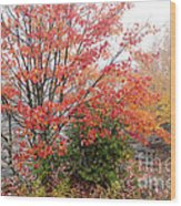 Fall Color Along The Highland Scenic Highway Wood Print
