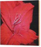 Gladiola Wood Print by Cathie Tyler