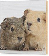 Guinea Pigs Wood Print