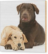 Labradoodle And Labrador Retriever Wood Print by Jane Burton