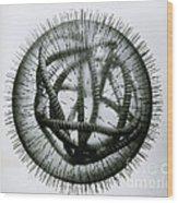 Measles Virus Wood Print by Omikron