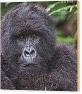 Mountain Gorilla Wood Print