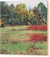 Patoka Lake - Indiana Wood Print by Jack R Brock