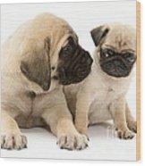 Pug And English Mastiff Puppies Wood Print