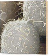 Stem Cells, Sem Wood Print